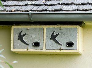 Mauerseglerkoloniekasten – Artikel 430