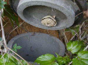 Hornisssen- und Florfliegenkasten