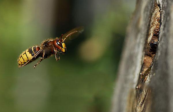 Insektennistblöcke