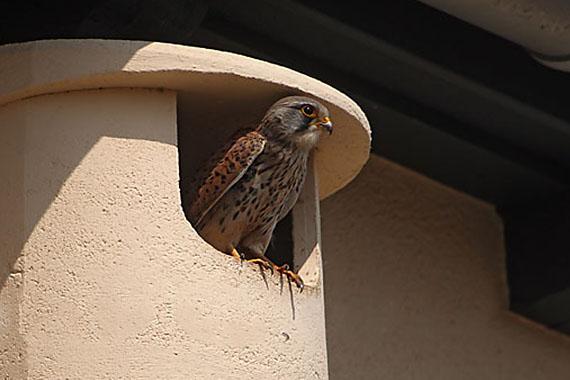 Brut- und Nistkästen für Vögel