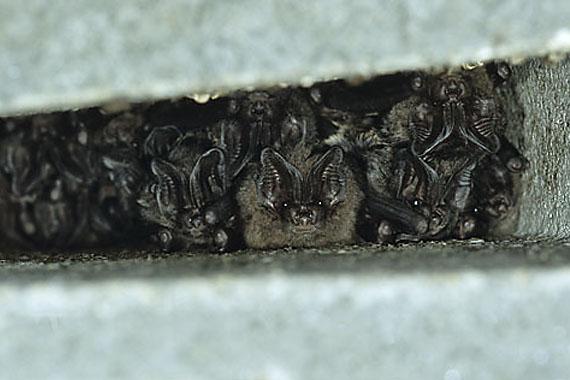 Fledermausquartiere für alle heimischen Fledermausarten