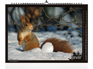 Fokus Natur Kalender 2018