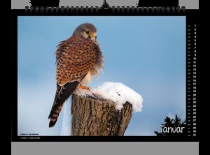 Fokus Natur Kalender 2019