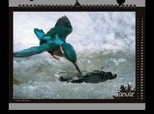 Fokus Naturkalender 2020